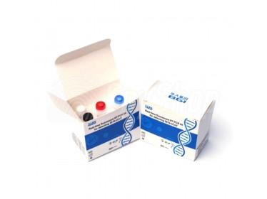 Laboratoryjny test genetyczny na koronawirusa BGI RT-PCR